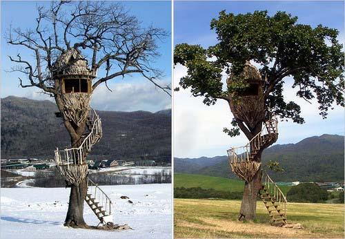 建在树上的房子