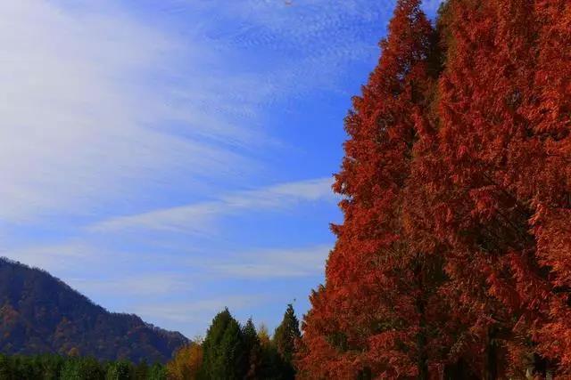 光雾山1.jpg