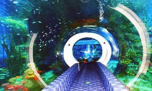 來一次海底探險吧
