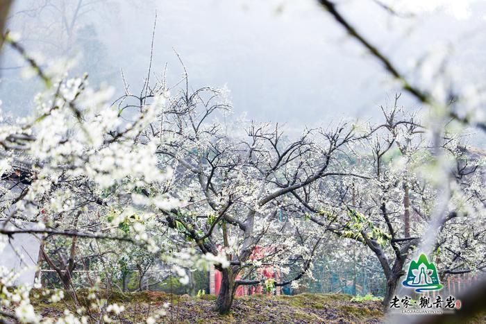 """旅游文化节开幕  目前,""""老家·观音岩""""已经列为大足区重点打造的乡村"""