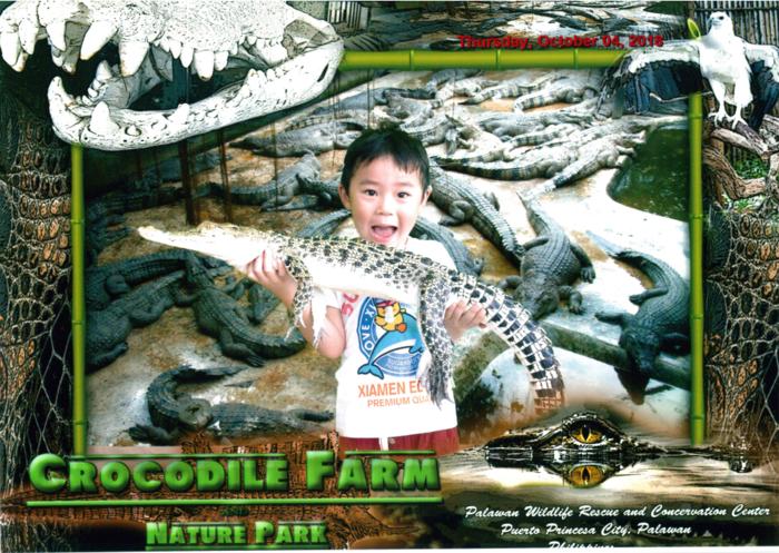 米米鳄鱼.png