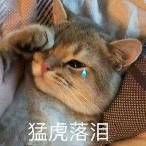猛虎落泪.jpg