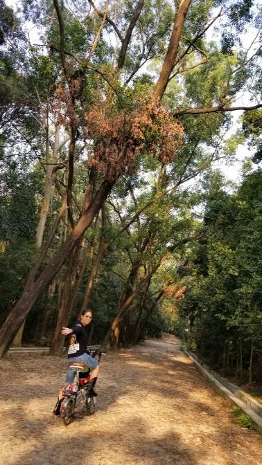 细数树木园,魔法森林,仙境湖泊珍藏上千佳木,孕育无数生灵.