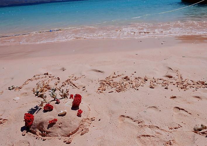 独揽粉红沙滩!体验震撼人心的科莫多
