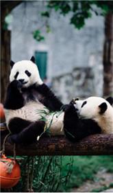 熊貓5天4晚親子營