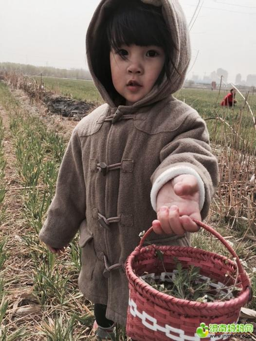 华山半日游 麦地里挖野菜,成就感满满的