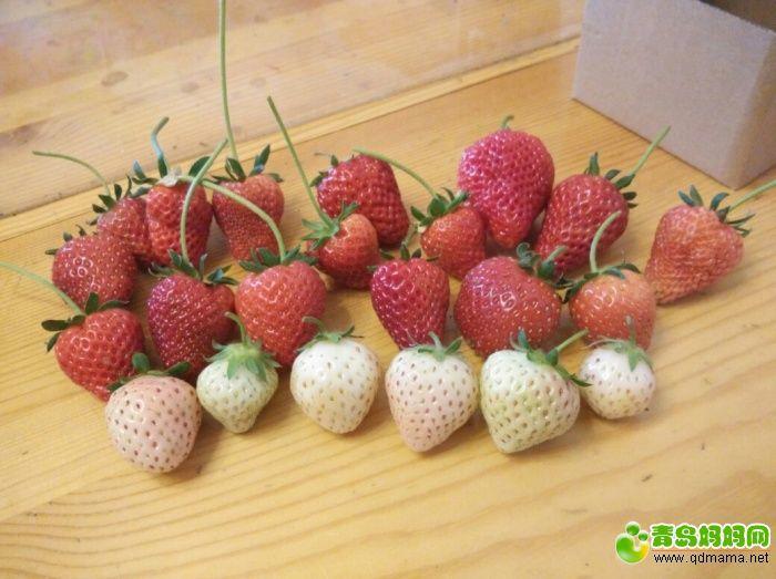草莓44.jpg