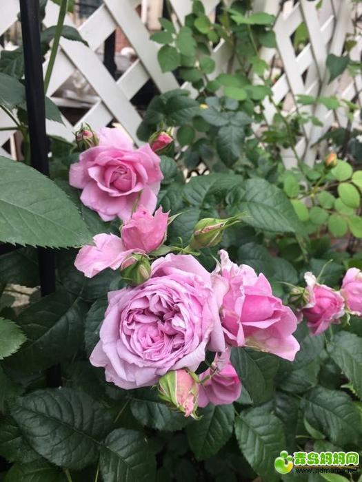 鲜花3.jpg