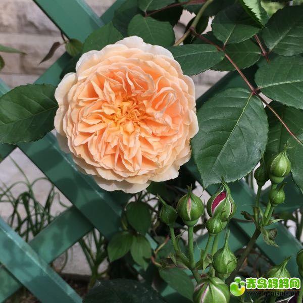 鲜花5.jpg