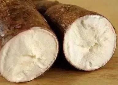木薯.png