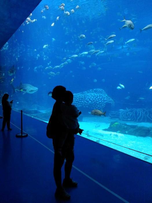 海洋王国鲸鲨馆