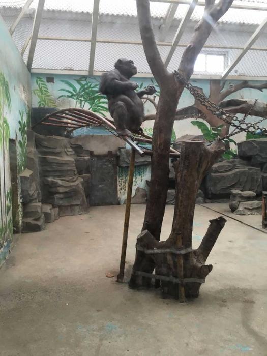 动物园的猩猩