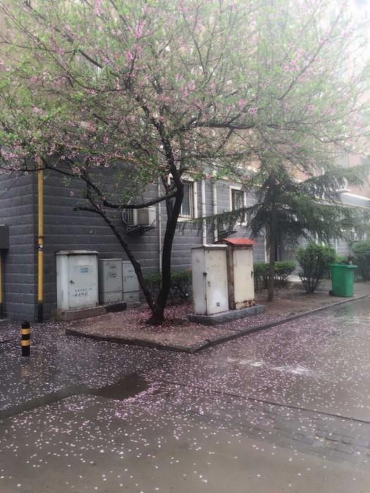 雨水中的桃花