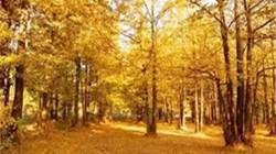 秋冬季郑州的颜值担当 竟然是这6个地方